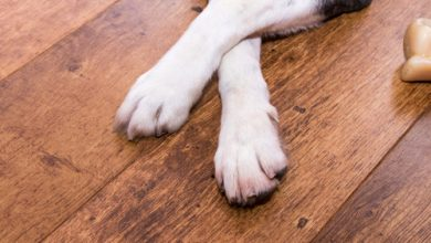 Photo of How To Make Your Floors Pet-Friendly